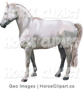 Clip Art of a Beautiful White Horse in Profile Facing Left by AtStockIllustration