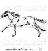 Clip Art of a Black and White Wild Horse in Profile, Facing to the Left, Its Tail and Mane Waving in the Wind by C Charley-Franzwa