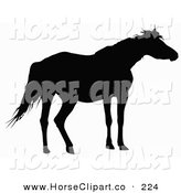 Clip Art of a Black Silhouette of a Horse by Dero