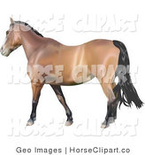 Clip Art of a Brown Horse with a Black Mane and Tail Facing Left by AtStockIllustration