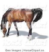 Clip Art of a Brown Horse with a Black Mane and Tail Grazing by AtStockIllustration