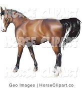 Clip Art of a Brown Horse with a Black Mane in Profile by AtStockIllustration
