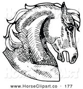 Clip Art of a Muscular Horse's Head in Profile, Facing Right on White by C Charley-Franzwa