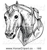 Clip Art of a Shy Horse's Head Facing Front on White by C Charley-Franzwa