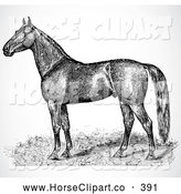 July 29th, 2013: Clip Art of a Strong Black and White Horse Sketch Profile by BestVector