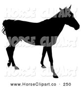 Clip Art of a Walking Horse Silhouetted in Black on White by Dero