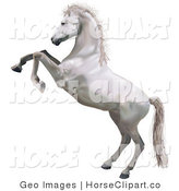 White horse standing on hind legs - photo#24