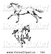Clip Art of Two Galloping Wild Stallion Horses, One in Profile, Running to the Left, One Running Forward by C Charley-Franzwa