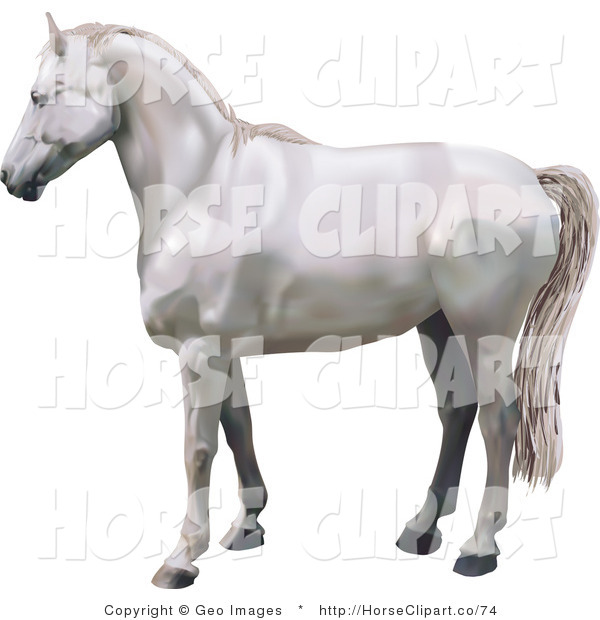Clip Art of a Beautiful White Horse in Profile Facing Left