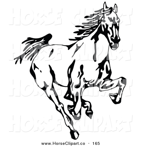 Clip Art of a Black and White Wild Mustang Running Forward Towards the Viewer on White