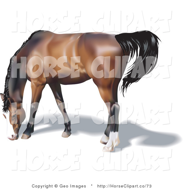 Clip Art of a Brown Horse with a Black Mane and Tail Grazing