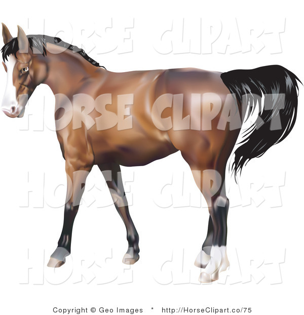 Clip Art of a Brown Horse with a Black Mane in Profile