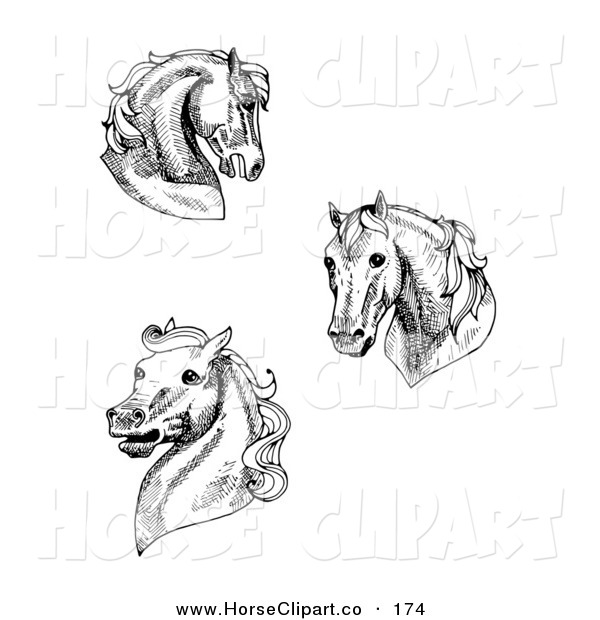 Clip Art of a Collection of Three Black and White Horse Heads