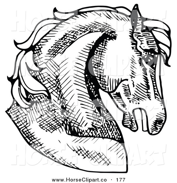 Clip Art of a Muscular Horse's Head in Profile, Facing Right on White
