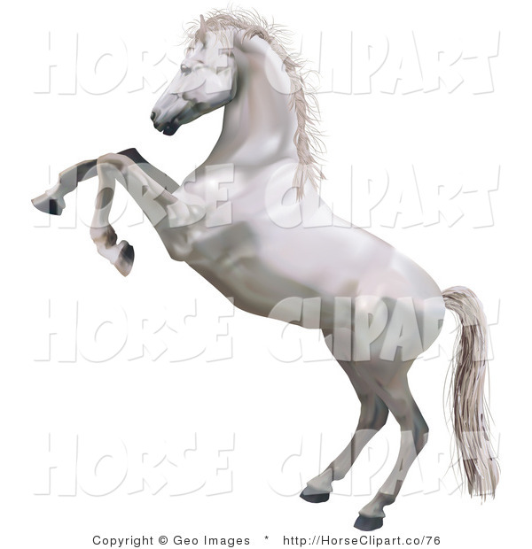 Clip Art of a White Horse Standing on Its Hind Legs While Rearing up and Kicking Its Hooves
