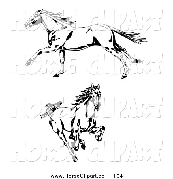 Clip Art of Two Galloping Wild Stallion Horses, One in Profile, Running to the Left, One Running Forward